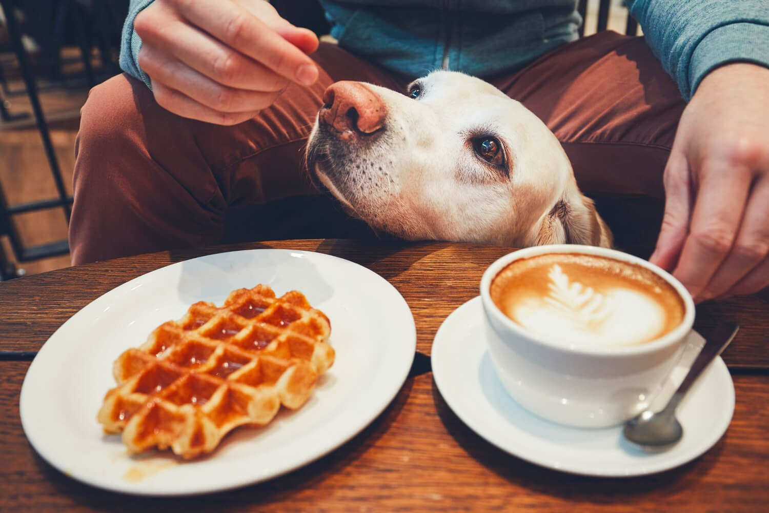 Austin-dog-friendly-restaurants