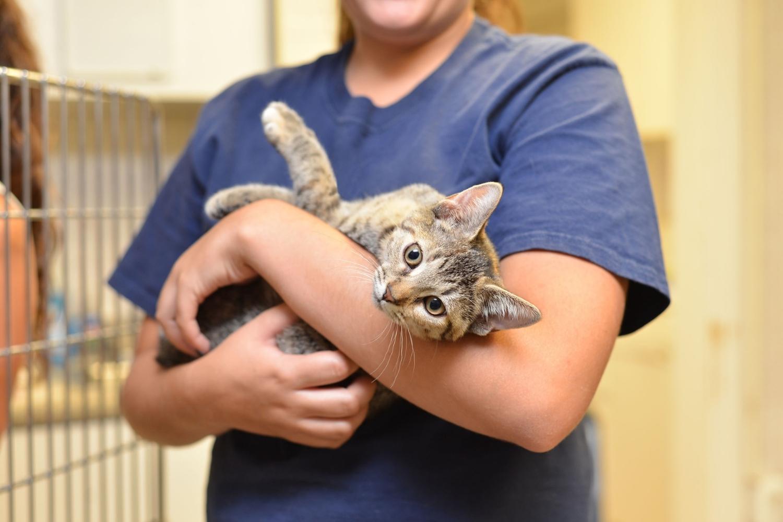 Adopt a Cat in Portland