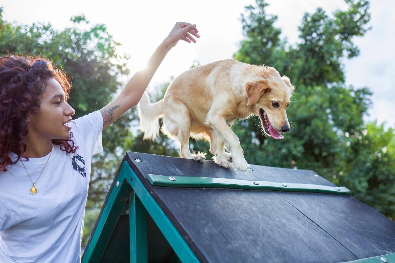 Dog Agility in San Antonio