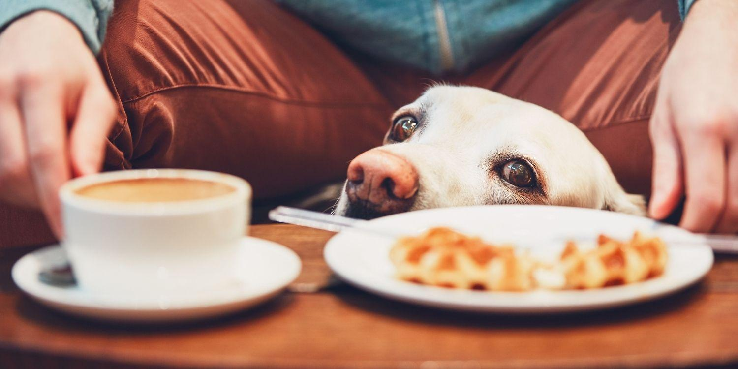 Austin, TX takes dog friendly to the next level! Check out the top dog friendly restaurants in the capital city of Texas here!