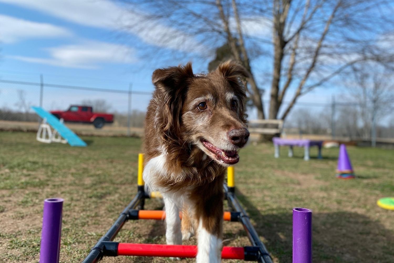 Boston Dog Parks Agility
