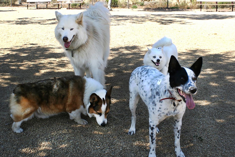 Boston Dog Parks - Dog Group