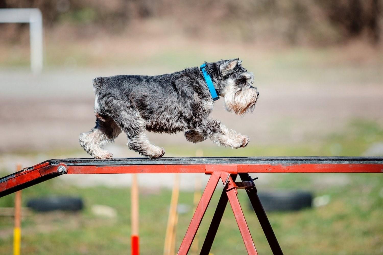 Columbus-dog-park - dog agility