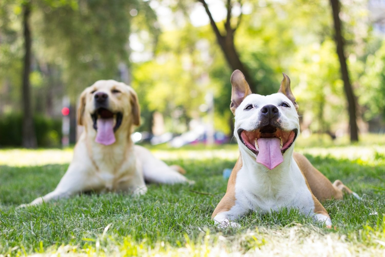Columbus-dog-park- happy dogs