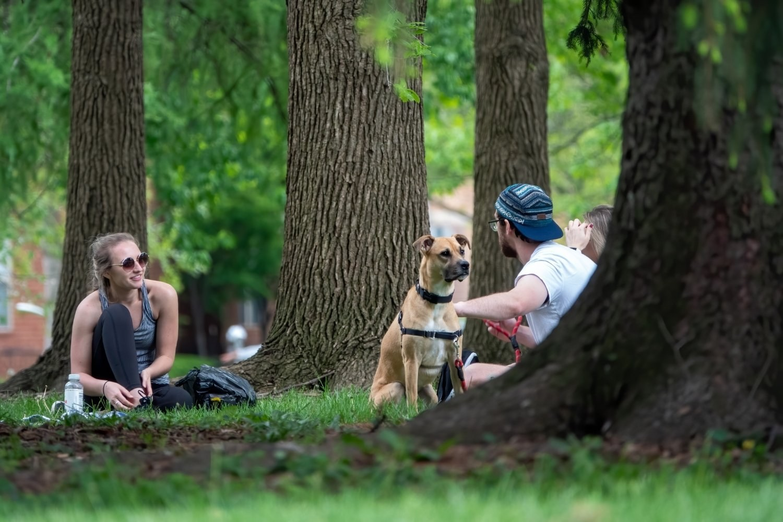 Columbus-dog-park - sitting in trees