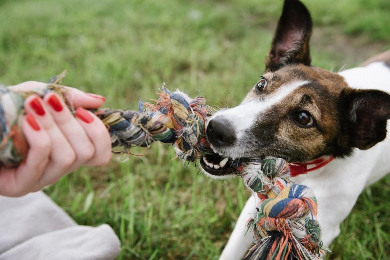 Columbus-dog-park - tug toy