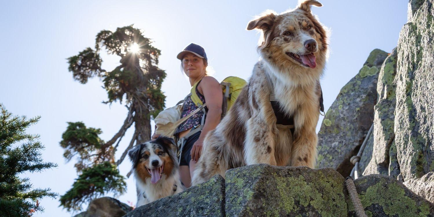 9 amazing, pet-friendly hikes in the DC area! These hiking trails are sure to make you smile and wag your tail!