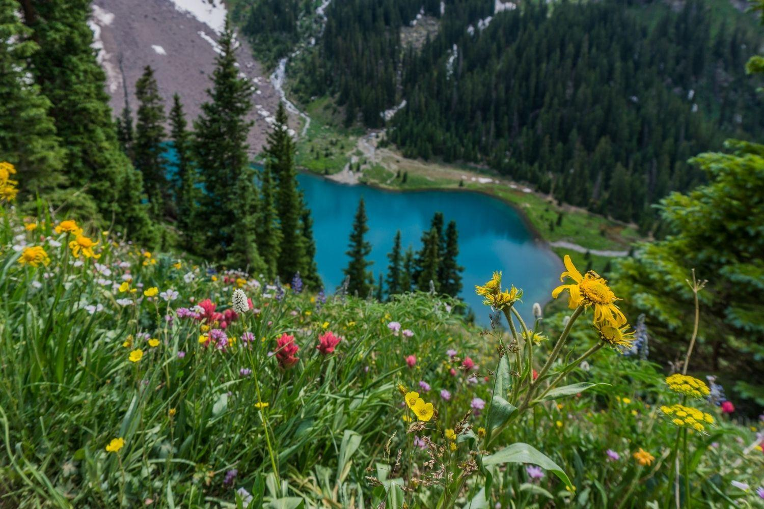 Dog-friendly Hike Denver - colorful wildflowers