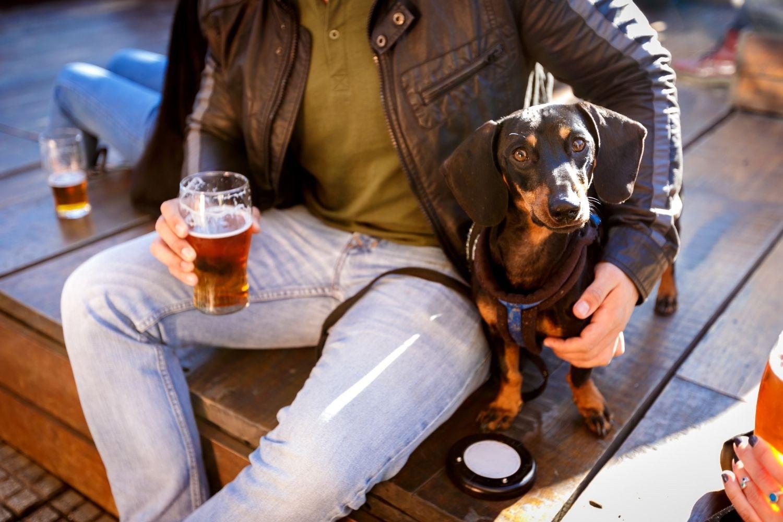 Dog having a beer at brewery
