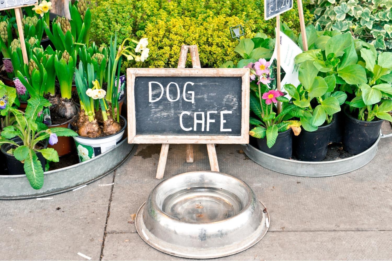 Dog Cafe San Fran