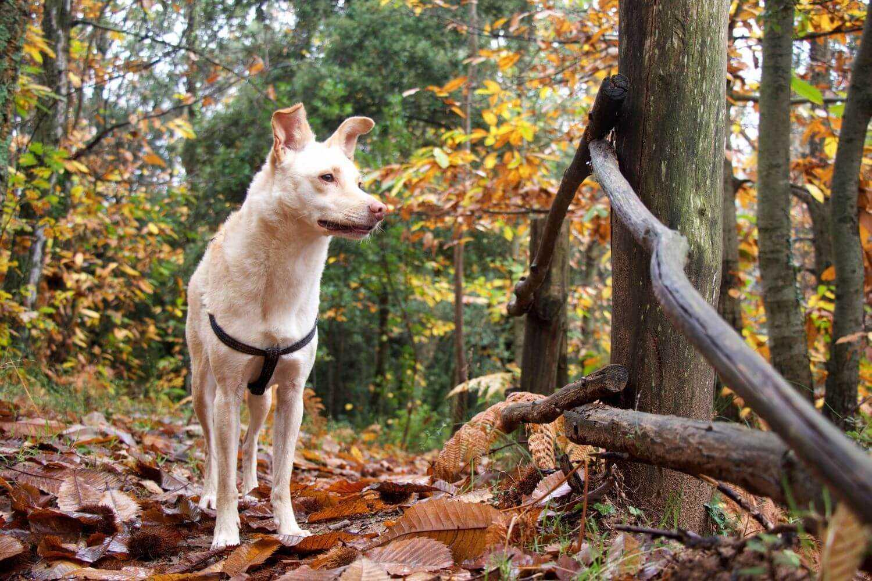 Atlanta dog hiking trail