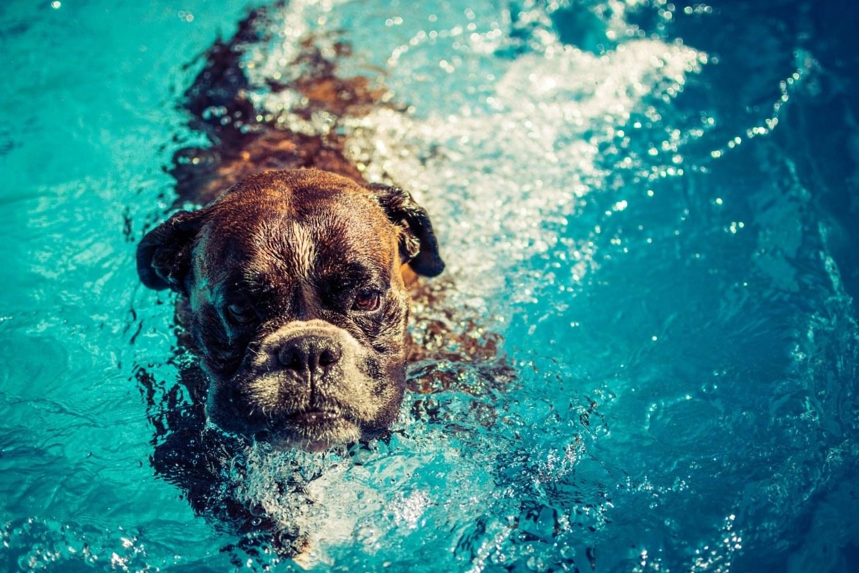 Dog-Parks-Charlotte-NC-swimming-dog