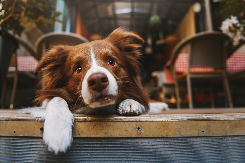 San Francisco Dog-Friendly Restaurants - dog in restaurant