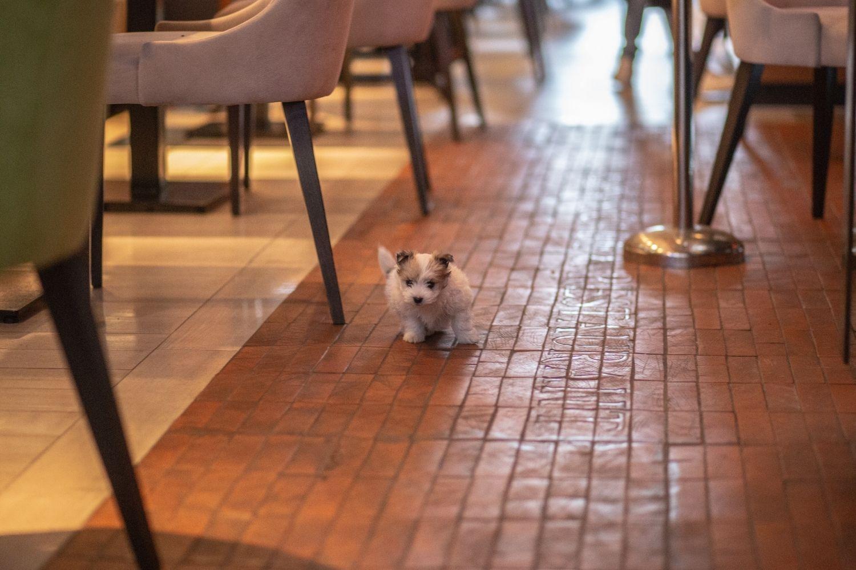 little fluff in Atlanta Restaurant