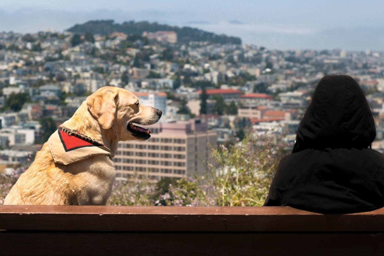 San Francisco Dog-Friendly Restaurants - view