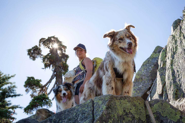 Dog-friendly Hike DC - dog on rock