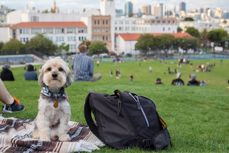 Dog on blanket in San Fran