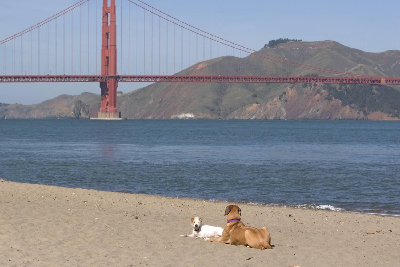 Dog park San Fran Golden Gate Bridge