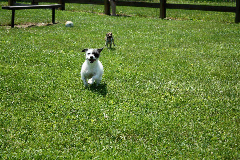 Houston Dog Parks - little dogs