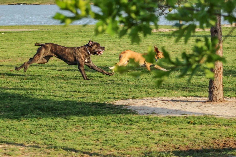 Indianapolis Dog Parks - running