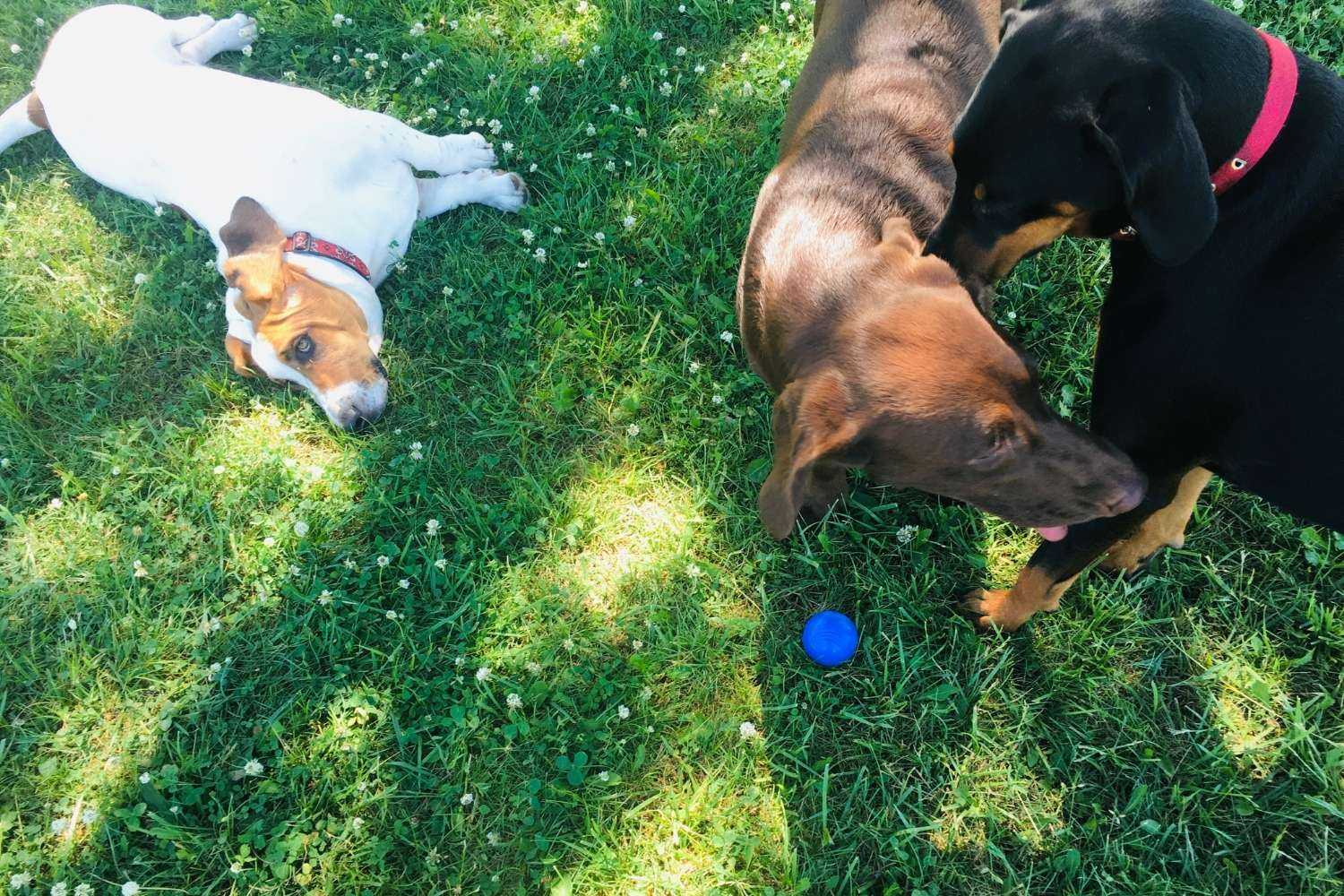 Indianapolis Dog Parks - grass
