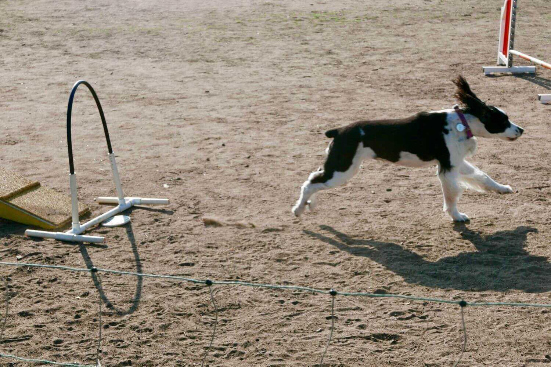 LA Dog Parks and Beaches - agility