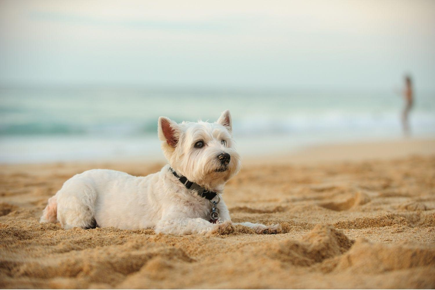 LA Dog Parks and Beaches
