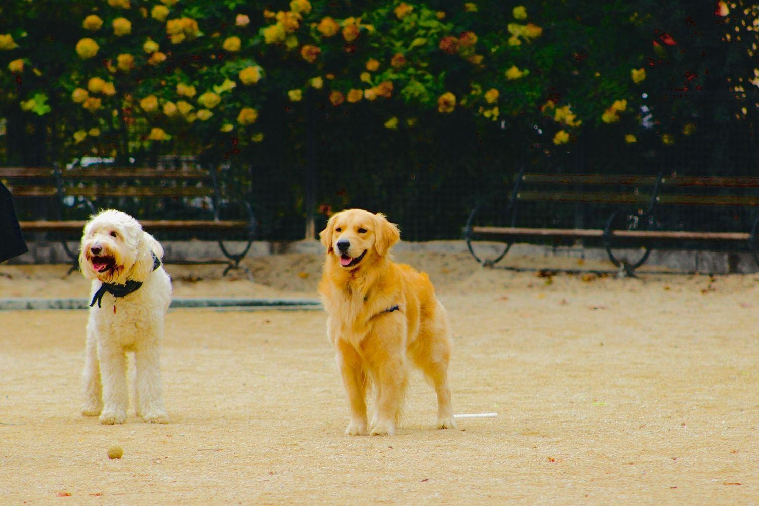 LA Dog Parks and Beaches - two dogs
