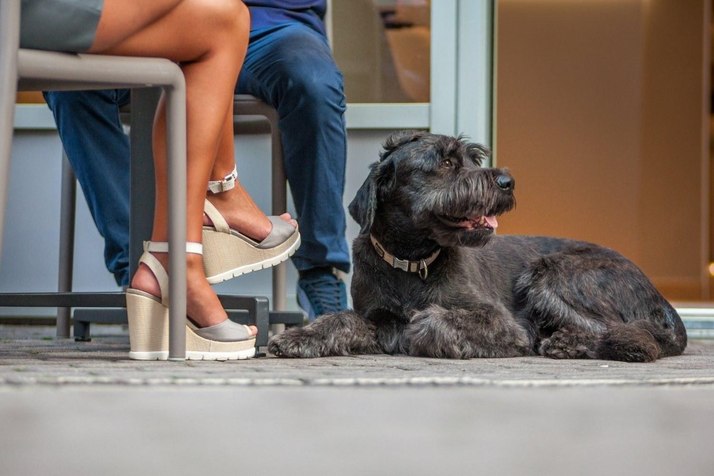 LPC-Dog-Friendly-Restaurants-Charlotte-dog-at-table-outside
