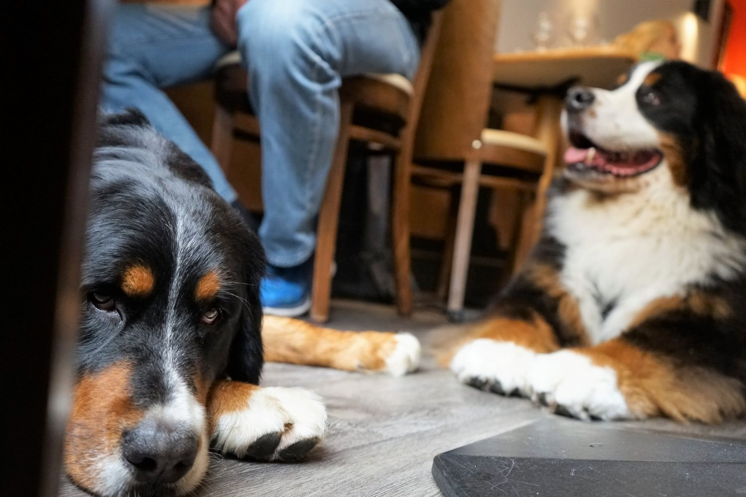 LPC-Dog-Friendly-Restaurants-Charlotte-dogs-at-table