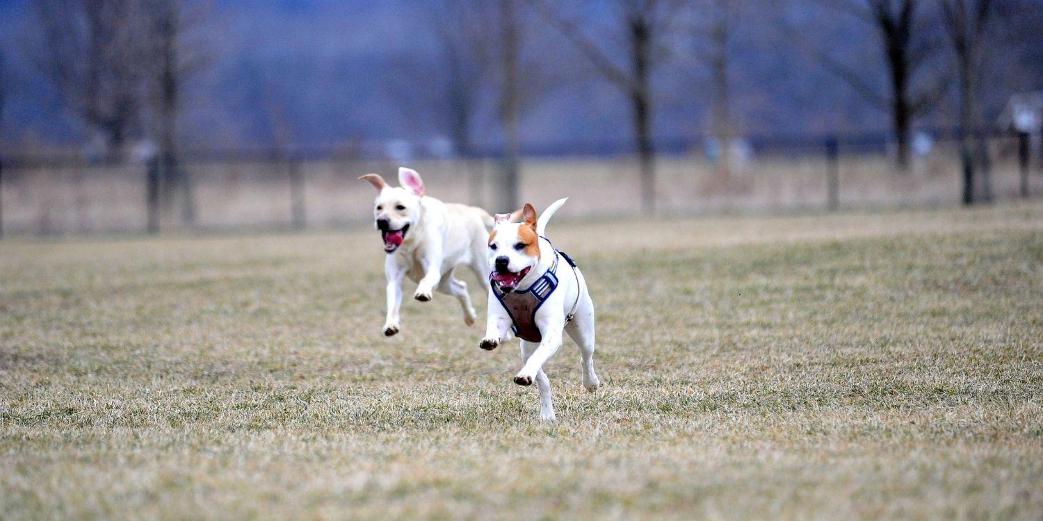 Local Pet Care's list of the absolute best parks, dog parks, walking trails, dog-friendly hikes, natural spaces, and off-leash areas in Nashville. Play time!