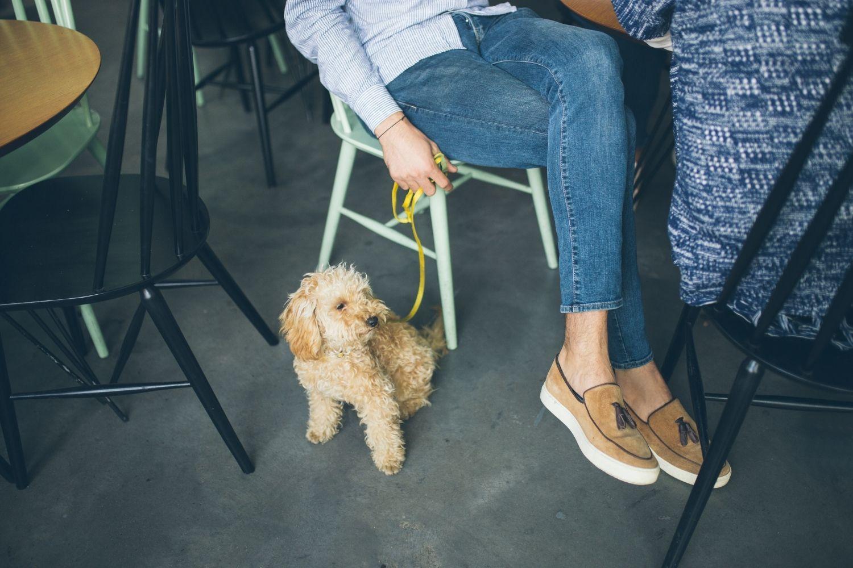 Dog-friendly Restaurant Los Angeles
