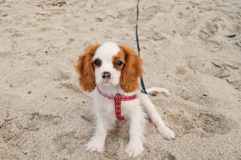 Puppy at beach Miami
