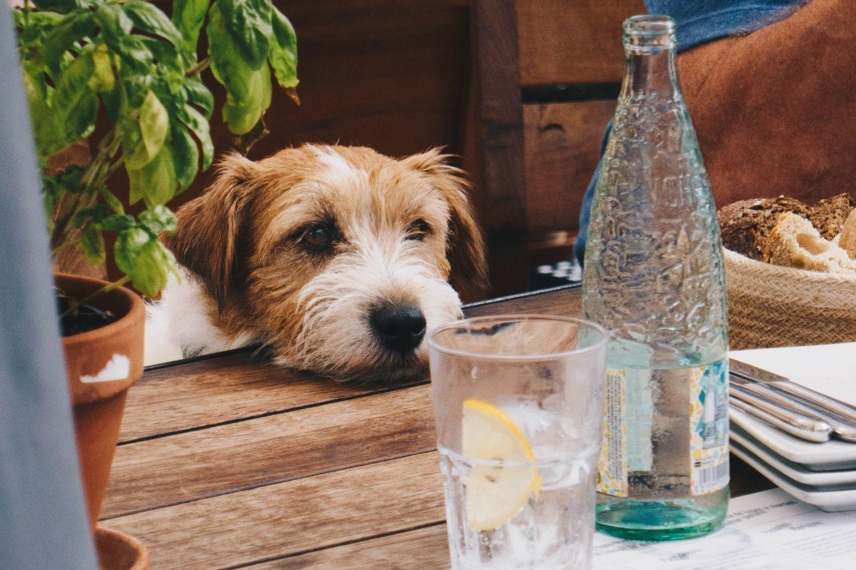 Miami-Dog-friendly-restaurant-looking-at-food