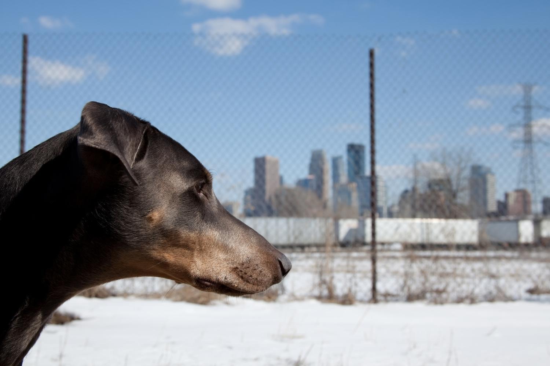 Minneapolis Dog Parks - Snow