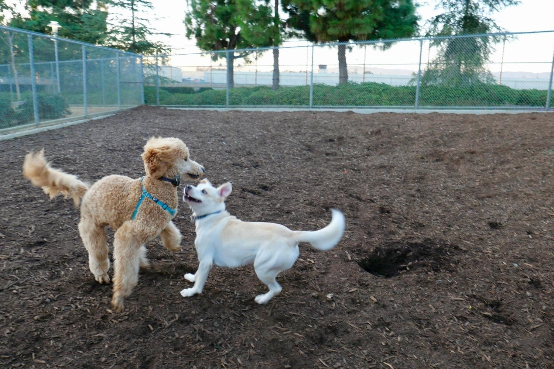 Minneapolis Dog Parks - Play