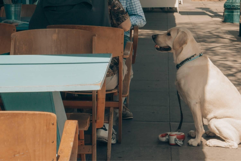 Minneapolis Dog-friendly Restaurants - hungry dog
