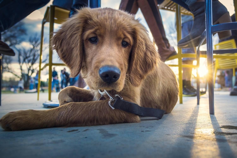 Minneapolis Dog-friendly Restaurants - puppy