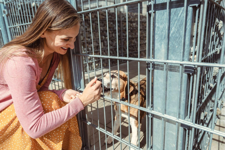 Adopt a pet in Nashville