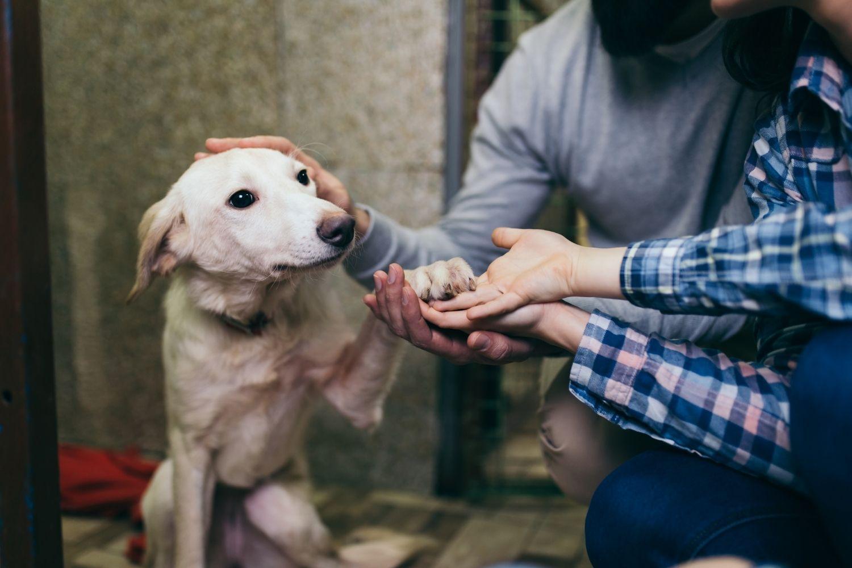 Adopt a pet in Nashville - puppy