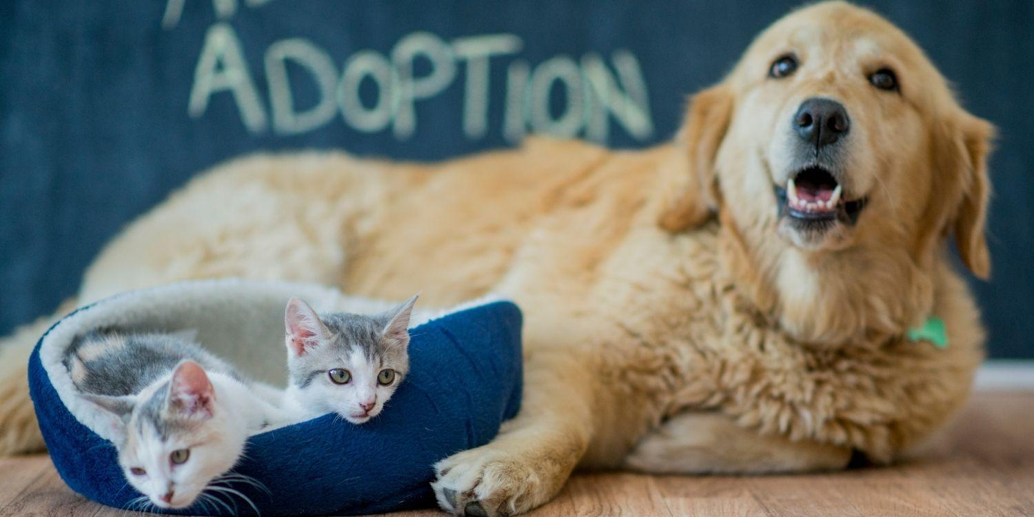 A list of the top dog, cat, and pet rescues and shelters in Nashville. Resources to help you find your new best friend!