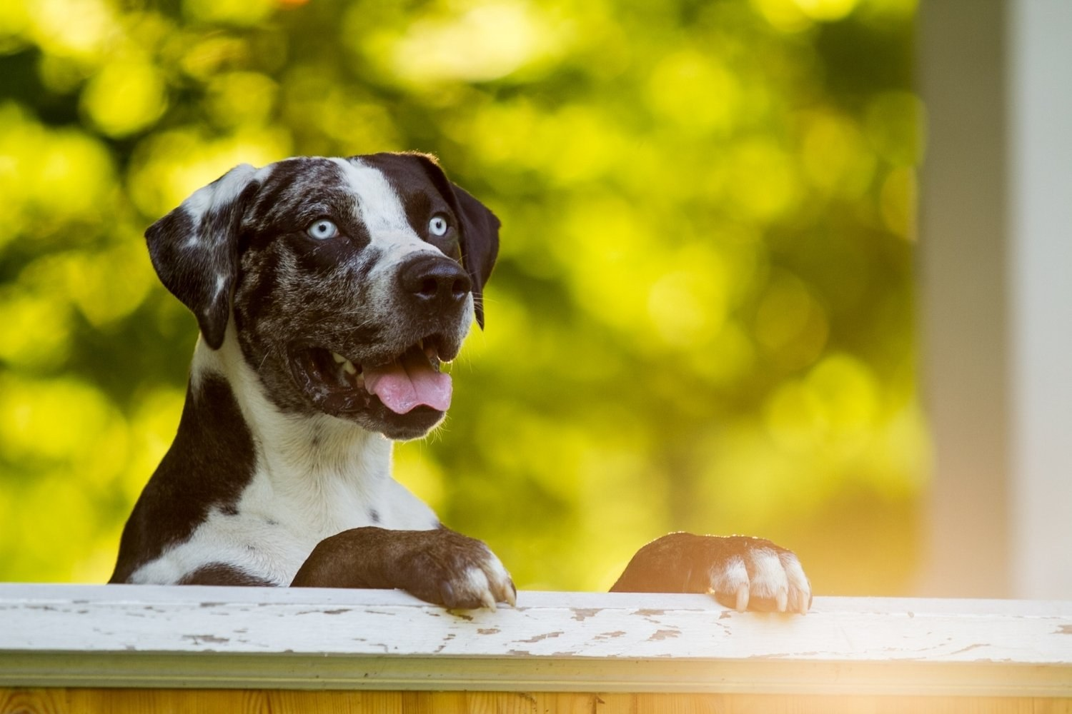 New-Orleans-Dog-Park-Catahoula
