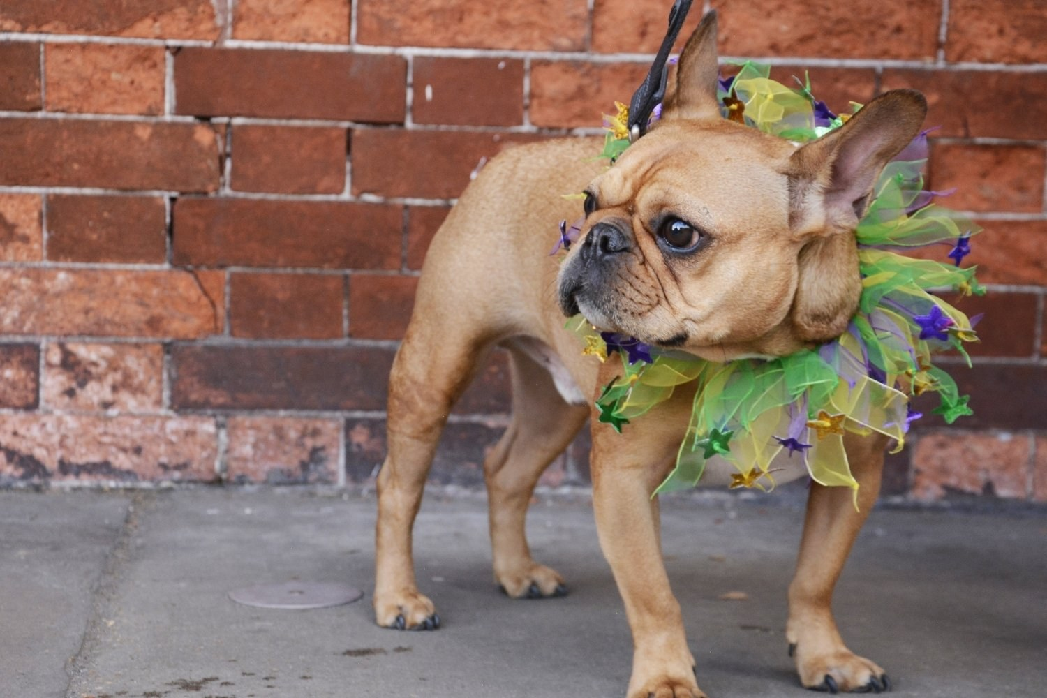 New-Orleans-Dog-friendly-party-dog