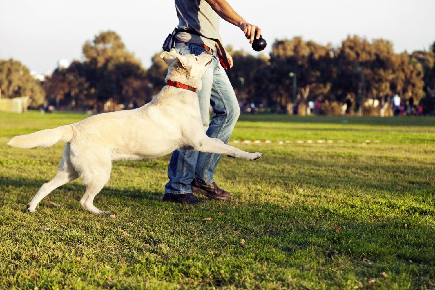 Raleigh Dog Parks playing fetch