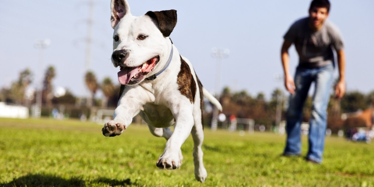 Local Pet Care's list of the absolute best parks, dog parks, walking trails, dog-friendly hikes, and off-leash areas in San Jose, CA! It's playtime!