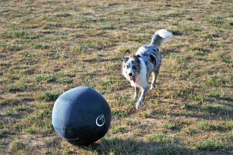 San Jose Dog Park with ball