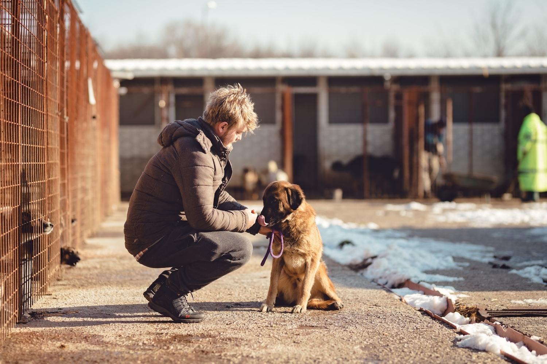 Adopting a dog outside in Boston