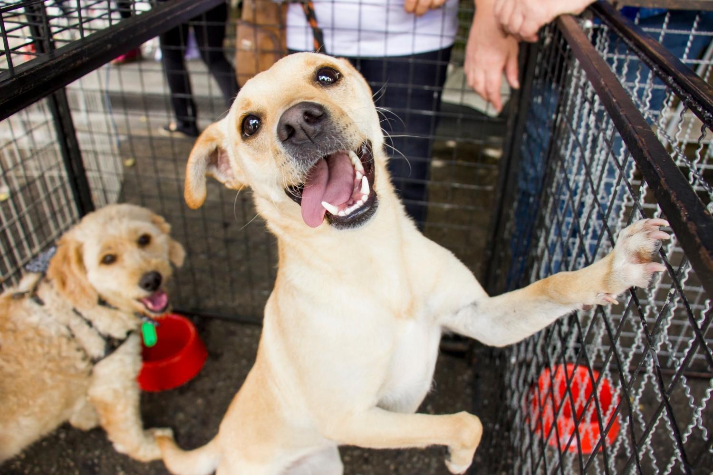 Happy dog in Boston Shelter