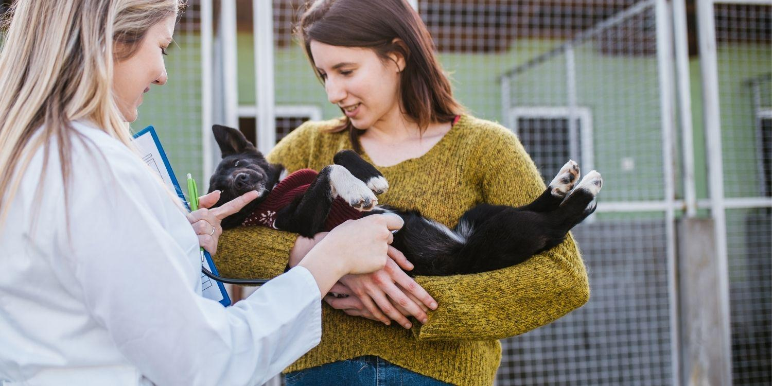A list of the top dog, cat, rodent, and reptile rescues and shelters in Austin. Helpful resources to help you adopt your new pet.