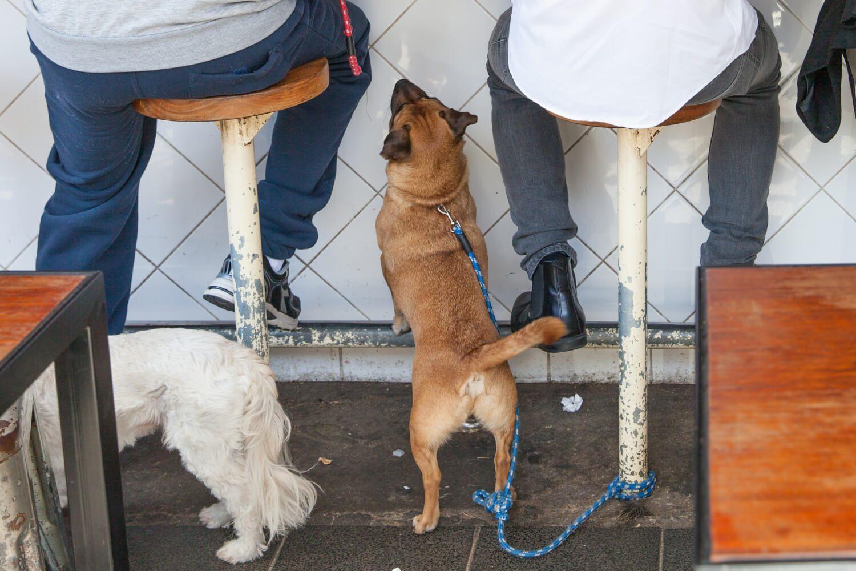 Dog under chair at restaurant for dog-friendly Chicago begging